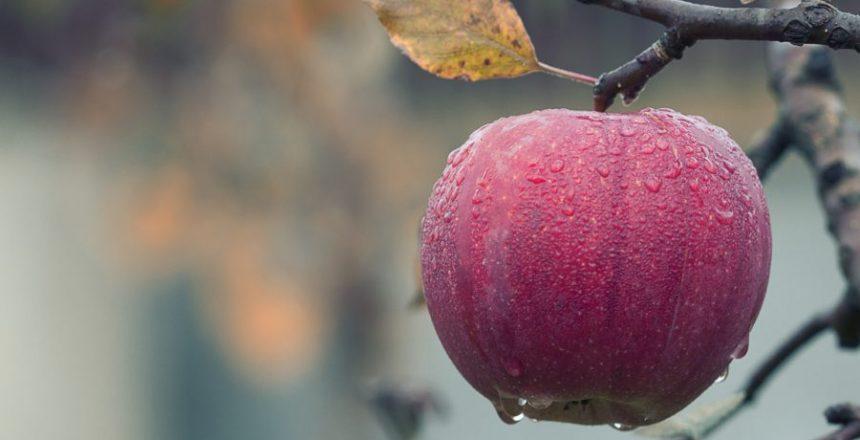agriculture-apple-blur-257840