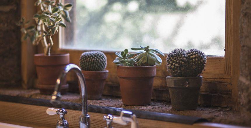 cactus-2556000_960_720